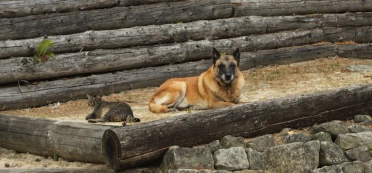 Ubytování se psy